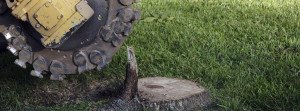 Stump grinding services in San Antonio