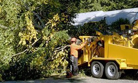 San Antonio Tree Service