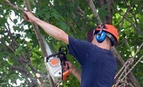 Tree Trimming Being Performed in San Antonio