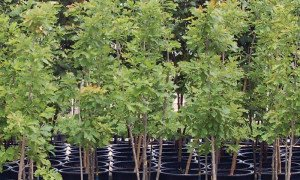Tree Sales And Planting In San Antonio