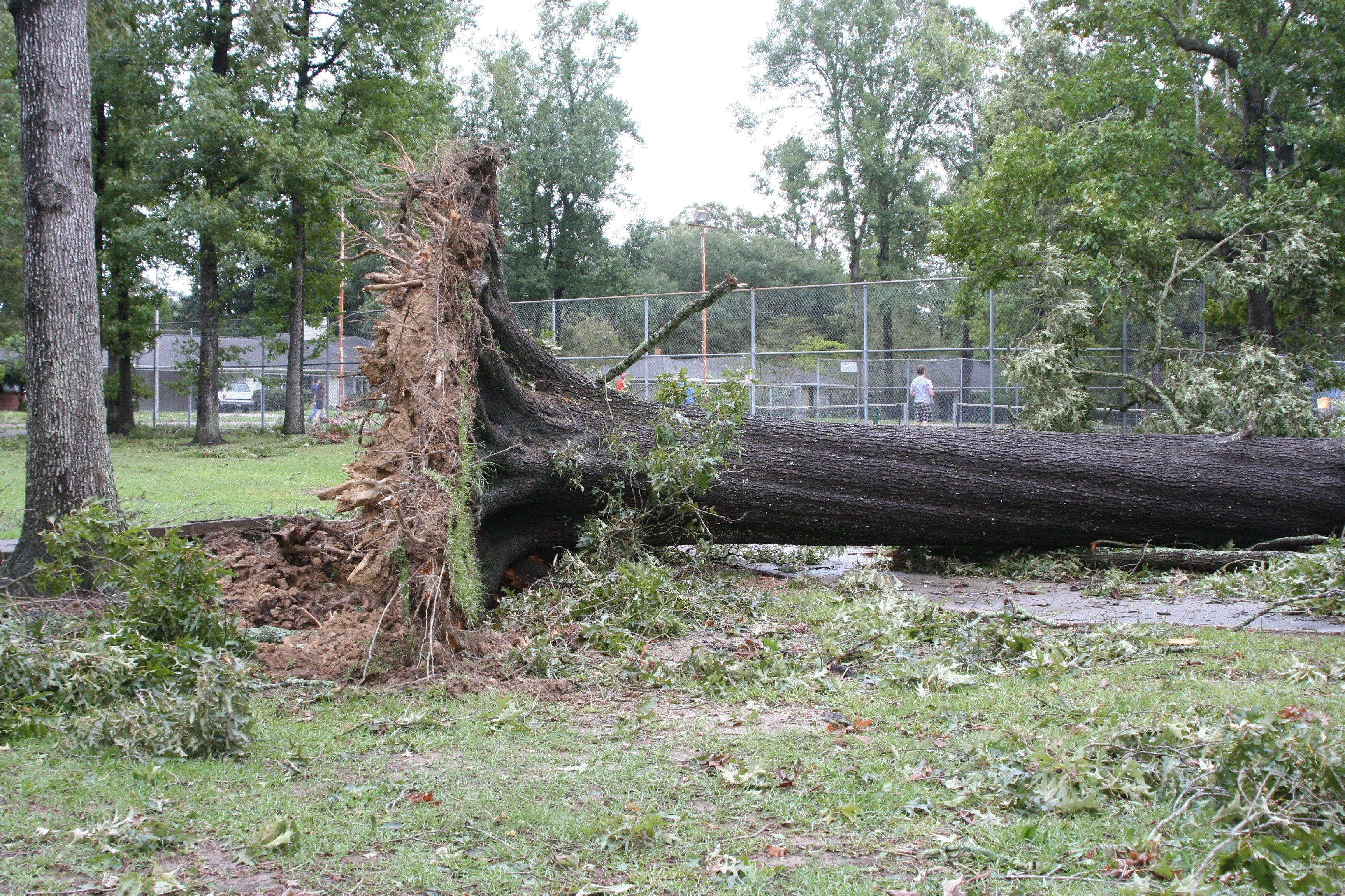 Rainfall Damages Amp Uproots Trees San Antonio Tree Surgeons