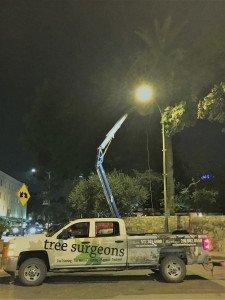 Tree Trimming At The Alamo
