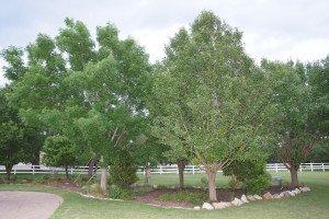 Tree Trimming in Schertz
