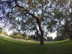 Boerne Tree Service