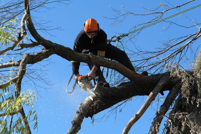 Tree Trimming In Boerne