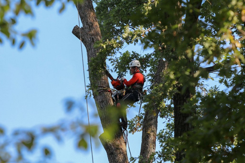 Tree Removal At Home In Canyon Lake