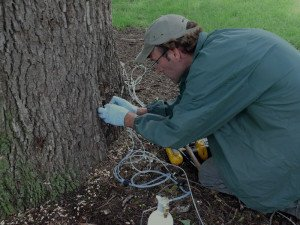 Tree Treatment On A Tree In Schertz Tx
