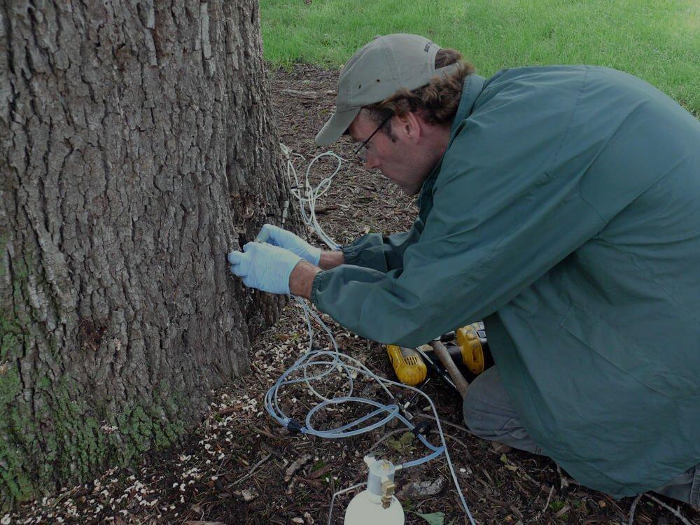 Tree Treatment On A Tree In Schertz Tx