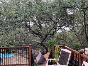 Blanco tree trimming job