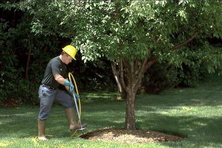 Tree Fertilization In New Braunfels